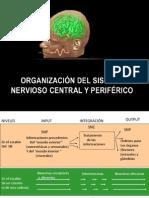 Clase Sistema Nervioso
