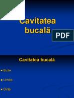 LP 04 Cavitatea Bucala