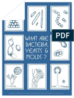 What Are Bacteria Yeasts Molds
