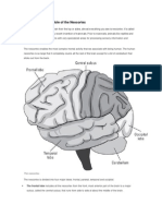 Neuroscience CheatSheet (from Neuroscience for Dummies)