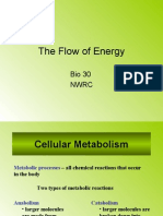 Flow of Energy Part 1