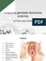 Anatomía genitales externos femeninos
