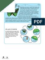 Naplan Lit Sample Butterfly