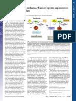 Understanding the Molecular Basis of Sperm Capacitation Through Kinase Design