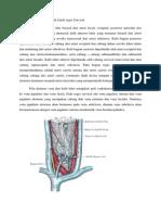 Vaskularisasi Dan Pembuluh Limfe Regio Cervical