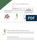 Exercício CN 5º ano- Plantas Raiz e Caule