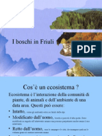 I Boschi in Friuli