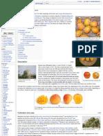 About Mango
