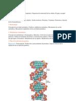 Bioquímica - Replicación del ADN