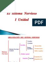 El Sistema Nervioso22 1