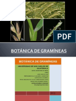 Botanica de Gramineas Doc 2
