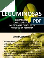 Botanica de Leguminosas Doc 3