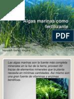 Algas Marinas Como Fertilizante