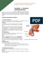 Anexo Aparato Genital AnatomIa FisiologIa y PatologIas
