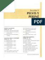 Pelvis Perine