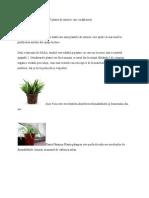 7 Plante de Interior Care Curata Aerul