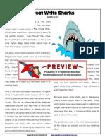 5th-greatwhitesharks