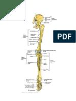 PBL Osteomyelitis