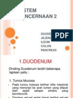 Sistem Pencernaan 2