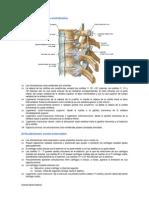 Articulaciones vertebrales