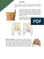 ANATOMIA- Sistema Circulatório