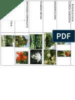 Trees & Botanical Name