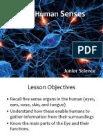 the nervous system - human senses