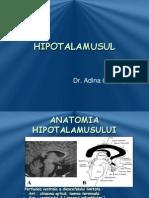 C2 Endocrinologie . HIPOTALAMUS
