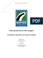 Cattle infect badgers with TB