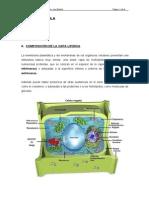 biología, explicacion sobre la celula