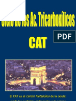 08 Ciclo Acidos Tricarboxilicos-13