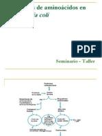 Biosíntesis de aminoácidos en Escherichia coli 2009