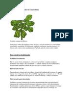 Propiedades medicinales del Cuachalalate.docx