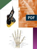 Anatomia Miembro Superior 2012