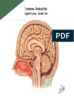Otak & Bt.otak