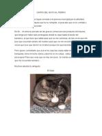Carta Del Gato Al Perro