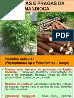 mandiocadoenasepragas-110218162206-phpapp02