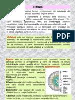 Materiale de Constructii - Lemnul
