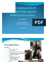Use of Angulates by Yellow Stone Grizzly Bears