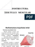 Structura Tesutului Muscular 3.1