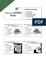 Técnicas Anestésicas Maxila