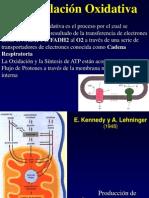 09 Fosforilacion Oxidativa-13