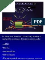 02 Etapas de La Sintesis Proteinas-13