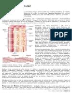 Fisiologia -  Músculo Esquelético