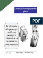 Sistema Ostemuscular Aiep