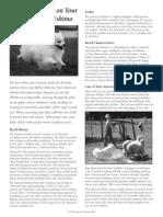 Amerian Eskimo Dog Breed Flyer