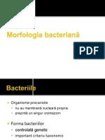 Curs Bacteriologie
