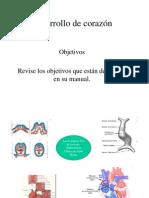 Embriologia de Corazon