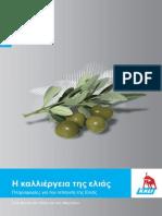Olive Br