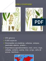 Poáceas_2013